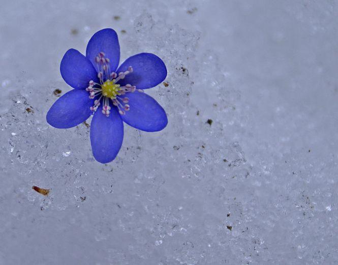 Ann Hudson - Between_winter_and_spring_