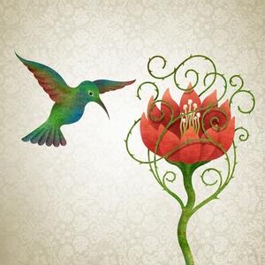 Hummingbird - vlad
